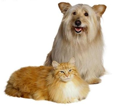 Dog and cat white background 1